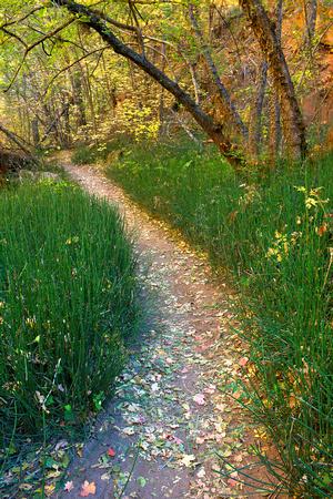Leave covered path in Autumn, at West Fork trail. Oak Creek Canyon, Sedona, Arizona.
