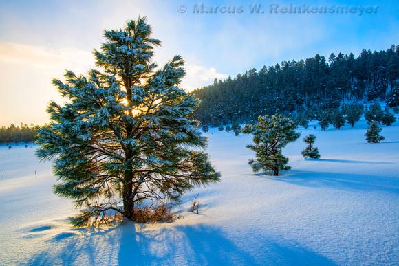 Sunrise snow flurries in Flagstaff, Arizona.
