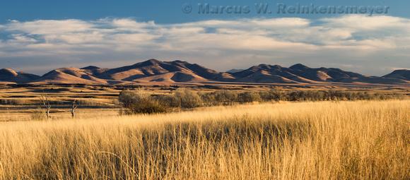 Prairie Grasses at San Rafael Valley AZ