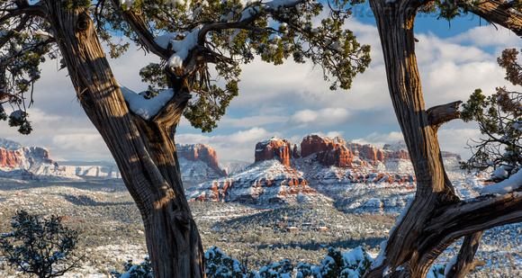 Cathedral Rock Viewed Through Branches  Sedona AZ 2 pano
