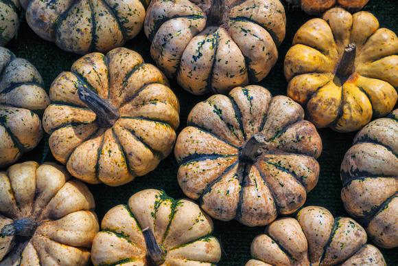 White Squash Pumpkins, 29th Street Farm Stand, Paw Paw, MIchigan 3