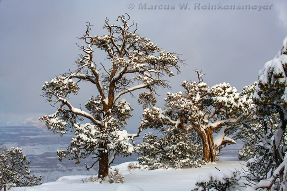 Snow Laced Trees on South Rim, Grand Canyon National Park, Arizona 1