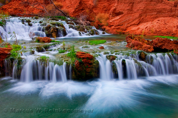 Near the newly formed Rock Falls, a terraced cascade of spring water. Havasupai Canyon, Arizona.