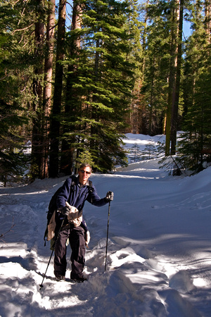 Photographer with walking sticks traversing snow covered Yosemite National Park.