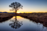 Tree Reflection at San Rafael Valley AZ