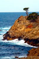 Cypress on the Sea Cliff, Point Lobos State Natural Reserve, Big Sur, California