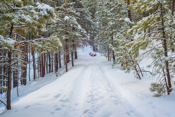 Snow covered forest road in Flagstaff, Arizona.