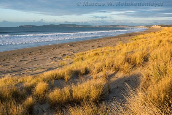 Point Reyes Limantour Beach Grass