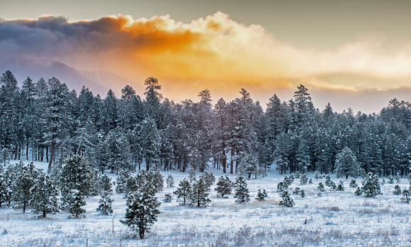 Snow Laced Meadow at Sunrise, Flagstaff AZ