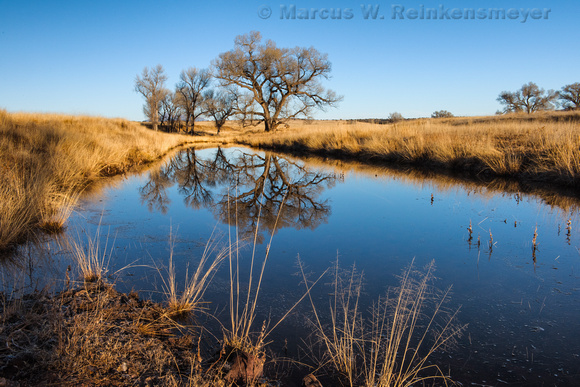 Santa Cruz River at San Rafael Valley AZ 1