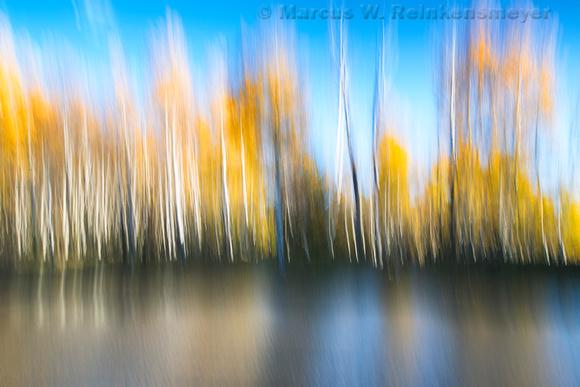 Autumn Aspen Reflections 1, Hart Prairie Road, Flagstaff, Arizona