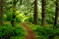 Caltsop Loop Trail, Ecola State Park, Cannon Beach, Oregon