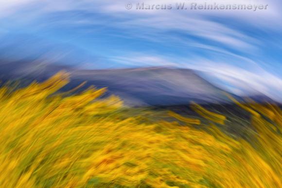 Flagstaff Sun Flowers and Mountain Streaked