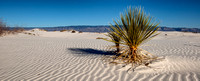 White Sands Vibrant Plant Life 2 Panoramic