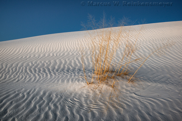 White Sands Blowing Plant Tracks